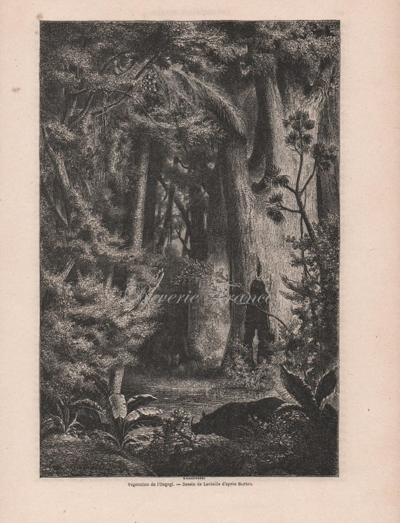 French Engraving from 1860 African Forest, Ougogi, Africa-Amazing View