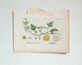 RESERVED. Vintage Botanical Illustrations