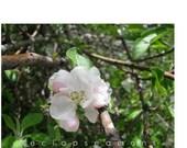 PHOTO - Apple Blossom Parfait