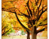RESERVED FOR DONNA - Golden Fall Tree - 8x10