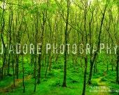 8x10/8x12 Photograph - 'Faerie Forest' - Glendalough, Ireland