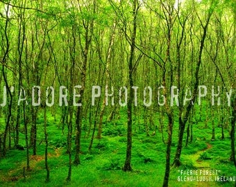 8x10/8x12 Photograph - 'Faerie Forest' - Glendalough, Ireland