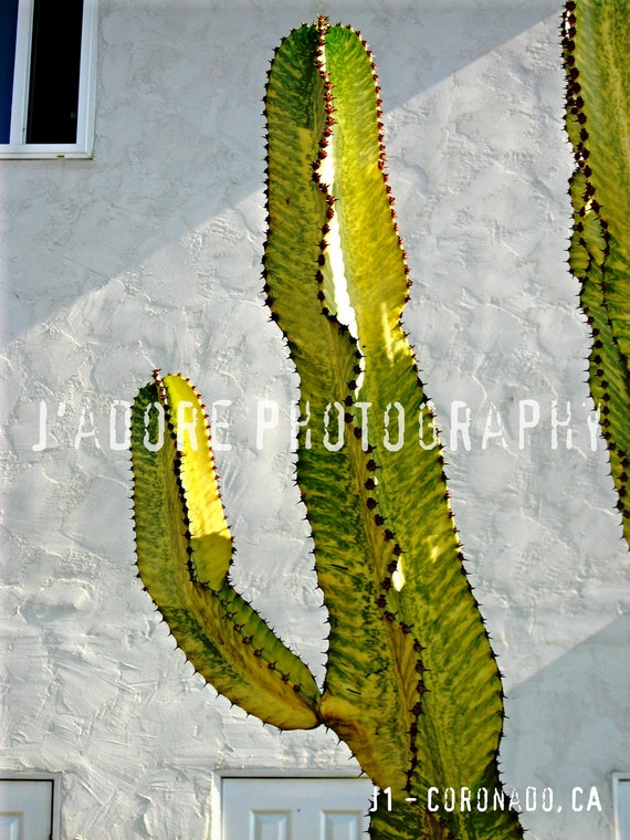 The Wandering Ex-Housewife Unframed Alphabet/Letter Photograph - 'Letter J'