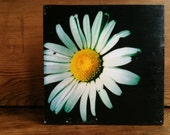 "Daisy Photo Block 8"" X 8"""