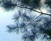 "Cool Pines - Fine Art Print 8 x 10"" - GlassKissinCreations"
