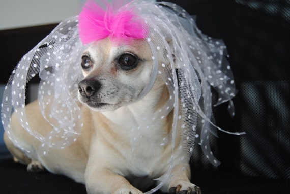 White Tulle Pink Bow Dog Wedding Veil