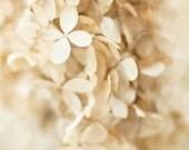 Winter White Flower Photography, Cream Hydrangeas, Winter Wedding, Beige Tan Ivory, Botanical, Flower Print, Dreamy Flower Picture, Neutral