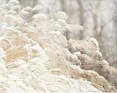 Snow Picture, Winter White Decor, Holiday Decor, Grey Beige Cream, Snowflakes, Winter Grasses, Winter Nature Photography, Pretty Winter Art