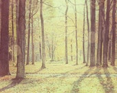Golden Autumn Photograph Dreamy Fall Decor Woodland Forest Trees in Dappled Sun - 8x10 - Gold yellow brown ethereal woods.