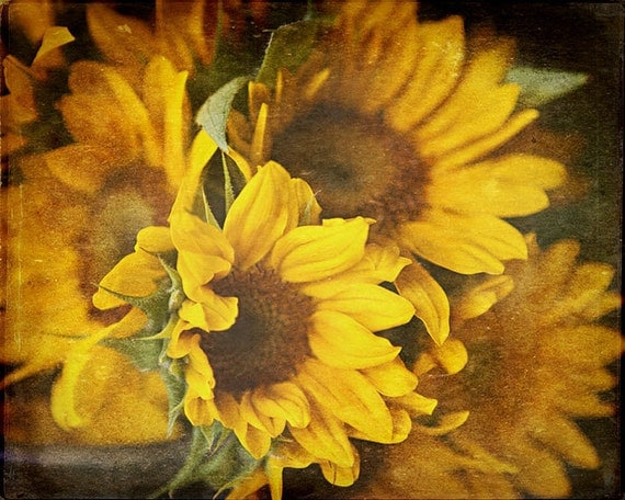 Sunflower Picture Yellow Sunflowers Spring by LisaRussoFineArt