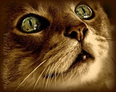 BOGO 5x7 Free Fine Art Photography ACEO  card eyes,sepia,green,cat,decor,pet lovers,neutral,tabby,beige,dramatic Free Shipping
