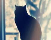 Feline Cat Photography gray,black and white,blue,Gifts under 25,smile,furry,pet lovers.silhouette,monochrome,cat lovers decor