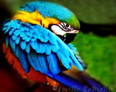 Macaw Parrot Photography Gifts under 25,Blue gold,blue,red,green,rainbow,vivid,colorful,feathers,bird lovers decor,turquoise,beautiful