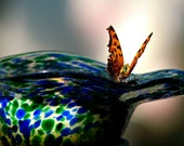 Butterfly Photography Art,Gifts under 25,admiral,monarch,orange,turquoise blue,lime green,nature lover's gift