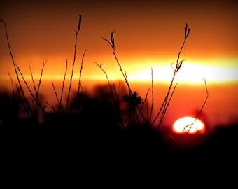 Sunrise Sunset Photography Gift idea,copper,sky,glowing,orange,silhouette,summer evening,romantic decor,ravishing sunset,wildflowers