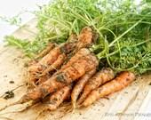 Vegetable Harvest- Three 4x6 set