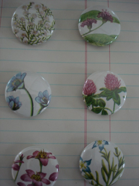 """Vintage Flowers  1"""" Pin-Back Buttons, cut out direct from guide book from 1950 set of 6"""