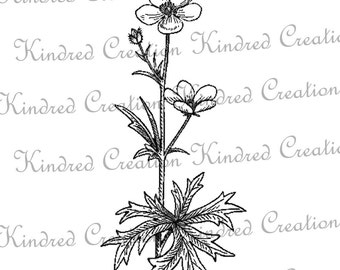 Buttercup Flower 300 dpi Digital Image Download Transfer For T Shirts Totes Napkins 109