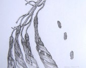 Art - woodland - Phormium cookianum - Seed Pods and Seeds - Limited Edition Glicee Print from Original Drawing