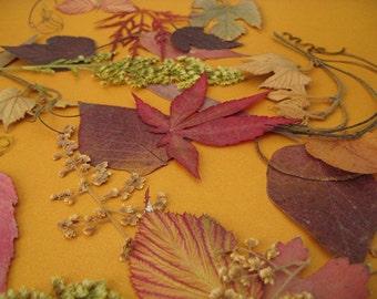 Fall Nature Decor Wedding Table Decor Fall Leaves Autumn Garden Real Nature CONFETTI