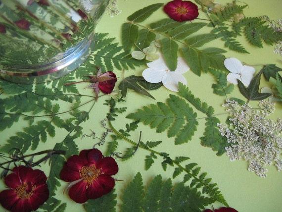 Wedding Flowers Wedding Table Decor Christmas FERNS Real Pressed Flower Confetti