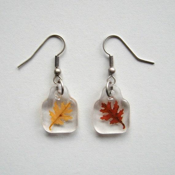 Autumn Earrings - Charmed Real Oak Leaf Earrings