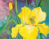 Yellow Iris - Original Flower painting