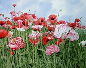 Red, White and Pink Poppies - watercolor reproduction