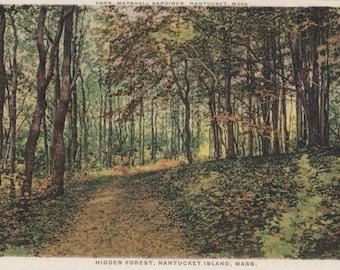 Hidden Forest, Nantucket post card. Gardiner, PHOSTINT