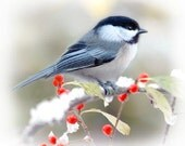 My Little Chickadee, five note cards, 4x5 cards with envelopes, black capped chickadee scarlet red winter berries early snow