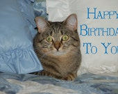 Birthday Card on Quality Glossy Greeting Card Paper with original photo of Cat