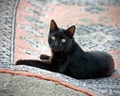 "5"" x 5"" Black Cat on a Persian Rug, Pet Portrait, Coastal Turkey, Fine Art Photography by Glennis Siverson - glennisphotos"