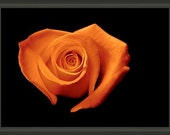 """Professionally Framed 8.75"""" x 6.50"""" Orange Heart Shaped Rose, Fine Art Floral Photography by Glennis Siverson"""