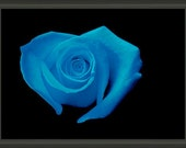 """Professionally Framed 8.75"""" x 6.50"""" Aqua Heart Shaped Rose, Fine Art Floral Photography by Glennis Siverson"""