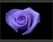 """Professionally Framed 8.75"""" x 6.50"""" Heart Shaped Purple Rose, Gift for Mom, Fine Art Floral Photography by Glennis Siverson"""