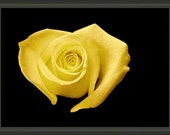 """8.75"""" x 6.50"""" Heart Shaped Yellow Rose, Professionally Framed, Fine Art Floral Photography by Glennis Siverson"""