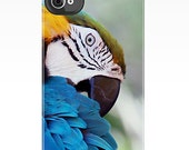 High Quality iPhone 4S/4 Deflector Case, Colorful Macaw Parrot, Nature, Wildlife, Fine Art Photography by Glennis SIverson