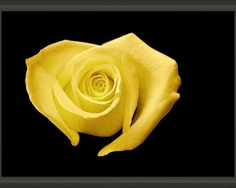 "8.75"" x 6.50"" Heart Shaped Yellow Rose, Professionally Framed, Fine Art Floral Photography by Glennis Siverson"