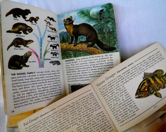 2 Books -Fish Mammals Guide Books  1939 Green Book of Salt Water Fish AND 1955 Mammals Guide   Set of Two BOOKS