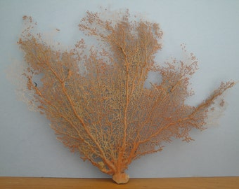 "Natural Sea Fan 20.8"" x 16.2"" Large Red  Seashells Reef Coral"