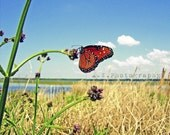 Queen ButterFly Photography 8x10 Print