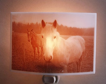 Horses  nightlight - in the french countryside