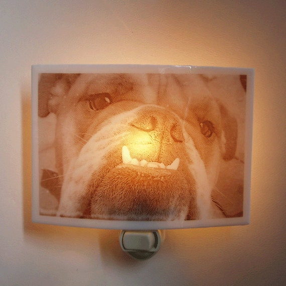 English Bulldog  nightlight