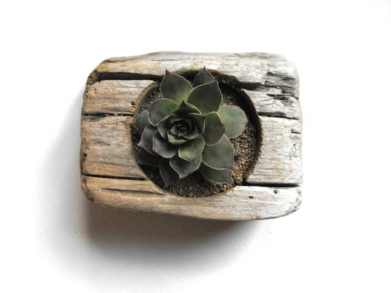 Driftwood Succulent Planter No. 1