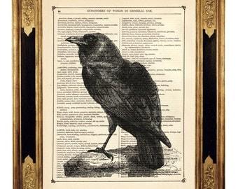 Halloween Raven Crow Bird Animal Natural History - Vintage Victorian Book Page Art Print Steampunk Gothic