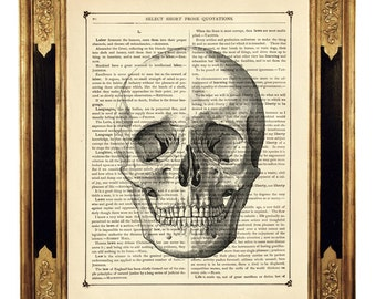 Human Skull Head Gothic - Vintage Victorian Book Page Art Print Steampunk