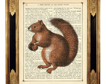 Squirrel holding an Acorn Forest Woodlands - Vintage Victorian Book Page Art Print Steampunk