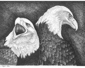 Eagles in Ink  - 11 x 14 Matted Print
