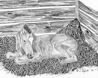 Newborn - 11 x 14 Matted Print