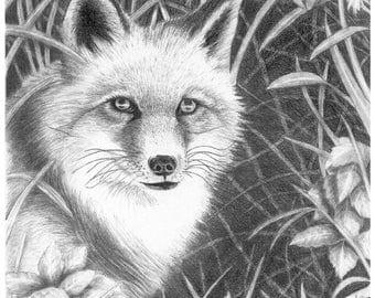 Fox - 11 x 14 Matted Print